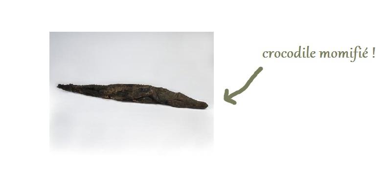 croco