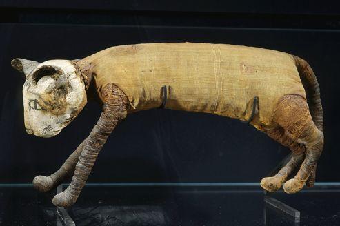 Momie animale - chat - musée du louvre